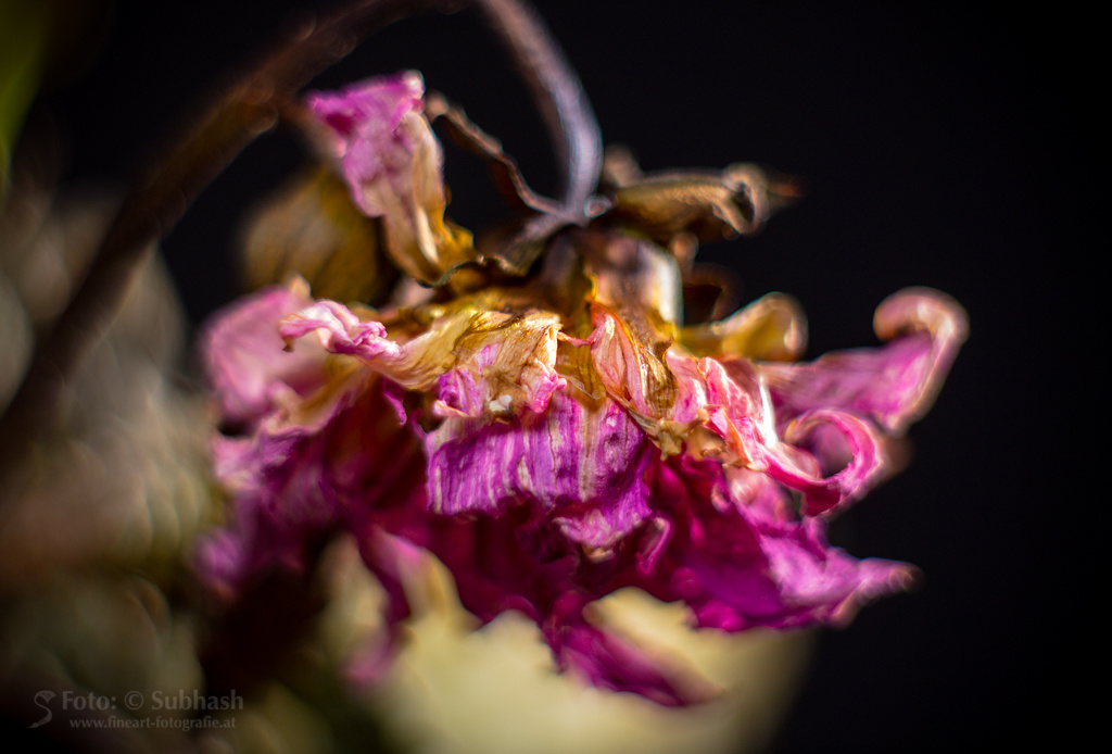 Subhash   Tod du wirst meine letzte Liebe sein. Digitale Fotografie, großteils mit Spezialoptik, Pigment-Inkjet-Druck, 38 x 57cm